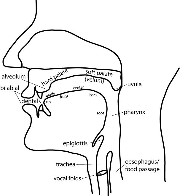 Vocal tract labels